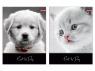 Teczka z gumką A4 UV Tray 1068 Cat&Dog
