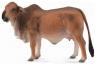 Krowa czerwona brahman L