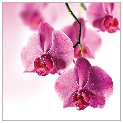Karnet kwiatowy FF02