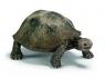 Żółw olbrzymi - 14601