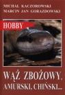 Wąż zbożowy, amurski, chiński? Kaczorowski Michał, Gorazdowski Marcin Jan