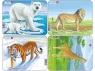 Niedźwiedź polarny / Lew / Tygrys / Żyrafa