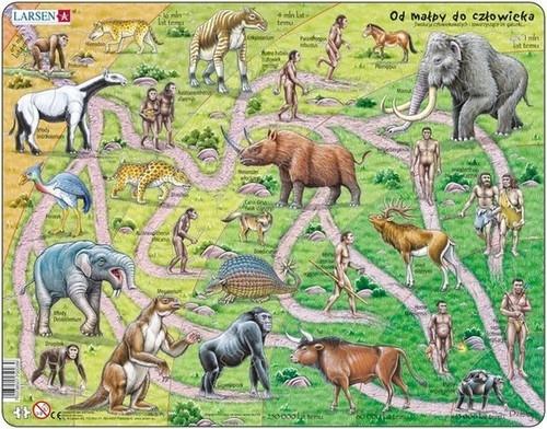 Puzzle Od małpy do człowieka 83