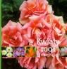 Kwiaty 1001 fotografii