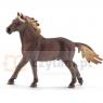 Mustang ogier - 13805