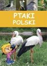 Ptaki Polski Marchowski Dominik