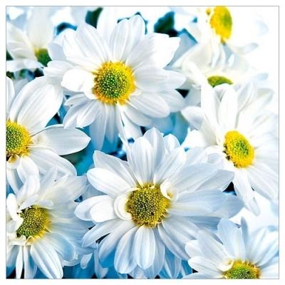 Karnet kwiatowy FF11