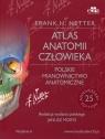 Atlas anatomii człowieka Polskie mianownictwo anatomiczne  Netter Frank H.