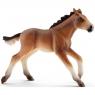 Mustang źrebie - 13807