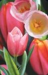 Mini kartka 3D Tulipan