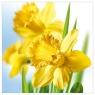 Karnet kwiatowy