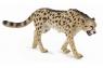 Gepard królewski L