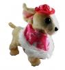Pies na smyczy w pelerynce i czapce