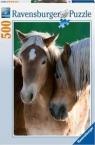 Puzzle 500 Portret koni (142095)