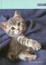 Brulion A5 Beniamin w kratkę 96 kartek Rachaelhale kotek
