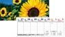 Kalendarz 2021 Biurkowy Poziomy MIX