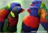 Kartka 3D papugi BPZ