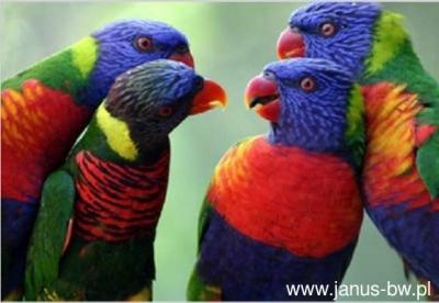 Kartka 3D papugi BPZ .