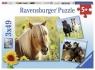 Puzzle 3w1: Kochane konie (8011) Wiek: 5+
