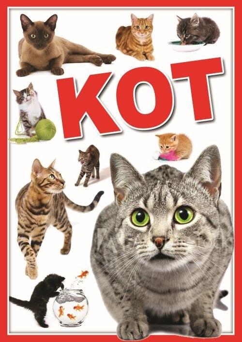 Koty (Uszkodzona okładka)