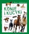 Nasi ulubieńcy Konie i kucyki