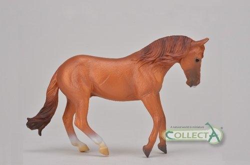 Ogier rasy Australian stock horse kasztan (004-88712)