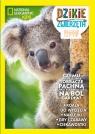 Dzikie Zwierzęta. Tom 27: Koala