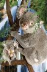 Minikartka 3D - Koala