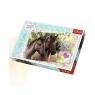 Puzzle Sweet & Lovely - Kochamy konie 260 (13213)