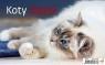 Kalendarz biurkowy Koty 2020 (S503-20)