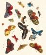 Karnet 17x14cm z kopertą Butterfly design decoration