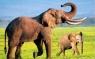 Kartka 3D słonie BPZ