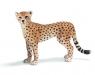 Gepard samica (14614)