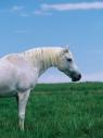 Teczka rysunkowa A3 Koń