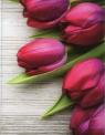 Okładka na dokumenty Tulipany