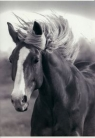 Zeszyt A5 w kratkę 16 kartek Koń (17-205H)