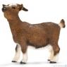 Koza karłowata (13715)