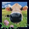 Pocztówka 3D Krowa