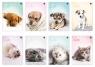 Zeszyt A5/32K kolorowa linia Puppy Sign mix(10szt)