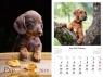Kalendarz 2019 wieloplanszowy Psy