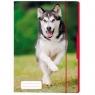 Teczka rysunkowa A4 z gumką Pies (50001583)