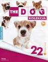 Dog Kolekcja 22 Corgi + maskotka