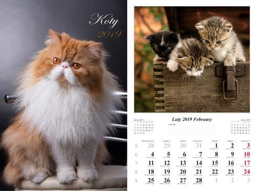 Kalendarz 2019 wieloplanszowy Koty Jurkowlaniec Marek