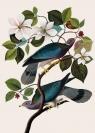 Karnet B6 z kopertą Two Birds