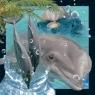 Magnes 3D Delfin