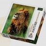Puzzle 1000 Lew Kenia Nature Limited Edition Wild Royals (10517)