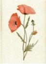 Karnet B6 Kwiaty. Mak