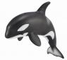 Orka młode (88618)