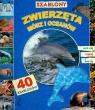 Szablony Zwierzęta mórz i oceanów z 40 szablonami
