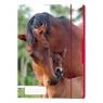 Teczka rysunkowa A4 z gumką Koń (50001606)
